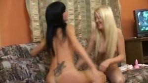 Ariyah and her partner are exploring their sexuality, while their horny neighbor is interested